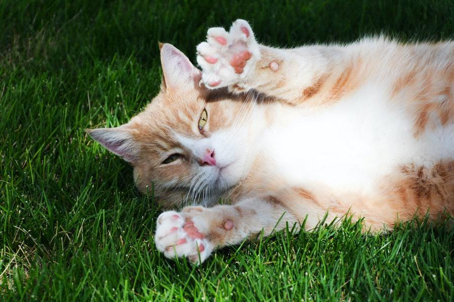 Nagelverzorging van je Hond of Kat