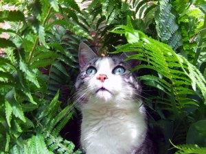 Kat in de struiken
