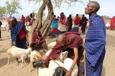 Tanzania, Dierenartsen Zonder Grenzen