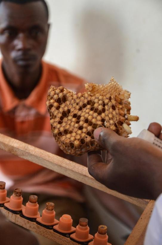Rwanda, Dierenartsen Zonder Grenzen