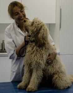 Drs. Van Ewijk met hond Puck - Dierenkliniek Winkelhof & Dierenkliniek Rijnwoude