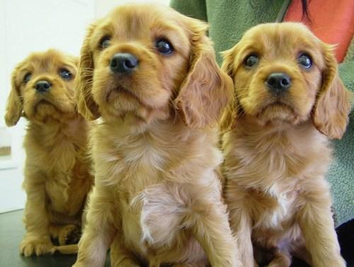 Puppy- en kittenconsultatiebureau