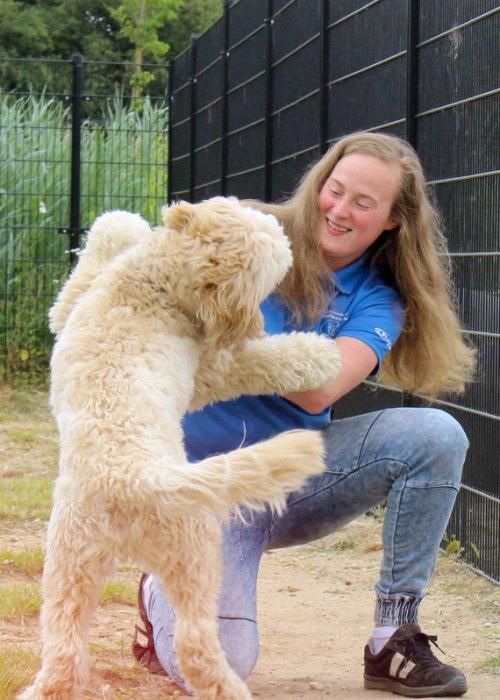 https://i0.wp.com/dierenpension.prinsenbankhoeve.nl/wp-content/uploads/2018/07/WEL-nogniet-gebruikt-hond-spelen-staand.jpg?resize=500%2C700&ssl=1