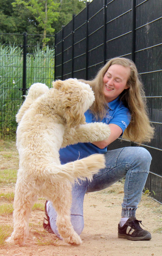 https://i0.wp.com/dierenpension.prinsenbankhoeve.nl/wp-content/uploads/2018/07/WEL-nogniet-gebruikt-hond-spelen-staand.jpg?ssl=1