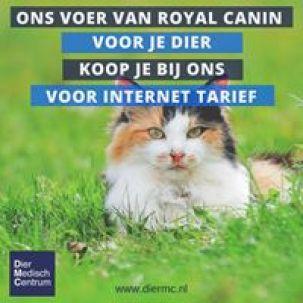 internetkat