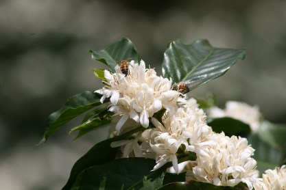 Bees on trees