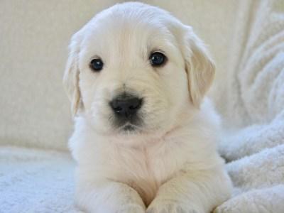 Toename verzekerde pups