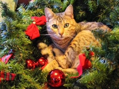 Decemberstips voor huisdiercadeautjes