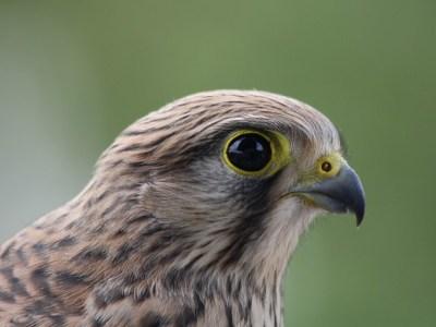 Vogelopvang Utrecht tijdelijk dicht
