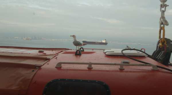 Blick aus unserem Kabinenfenster: Alleinreisende Möwe auf einem Artania Rettungsboot