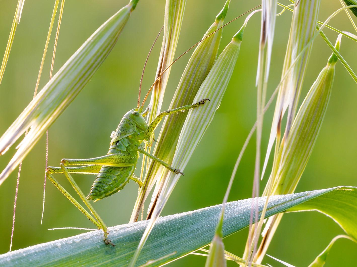 Tag der Insekten 4_3