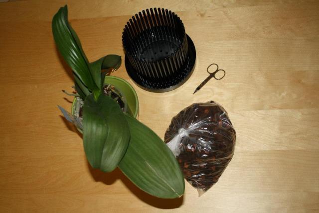 orchideen umtopfen eine schritt f r schritt anleitung orchideenfans blog. Black Bedroom Furniture Sets. Home Design Ideas