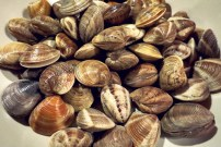 Mediterrane Bordküche. Segelrezept