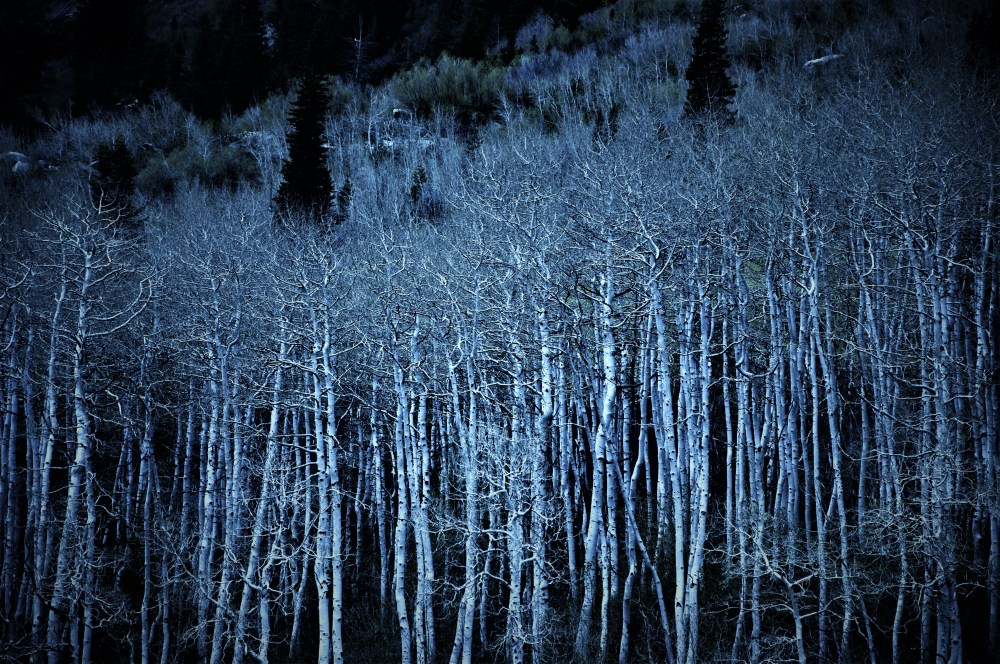 ghosttrees