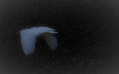 whitebirdcorona