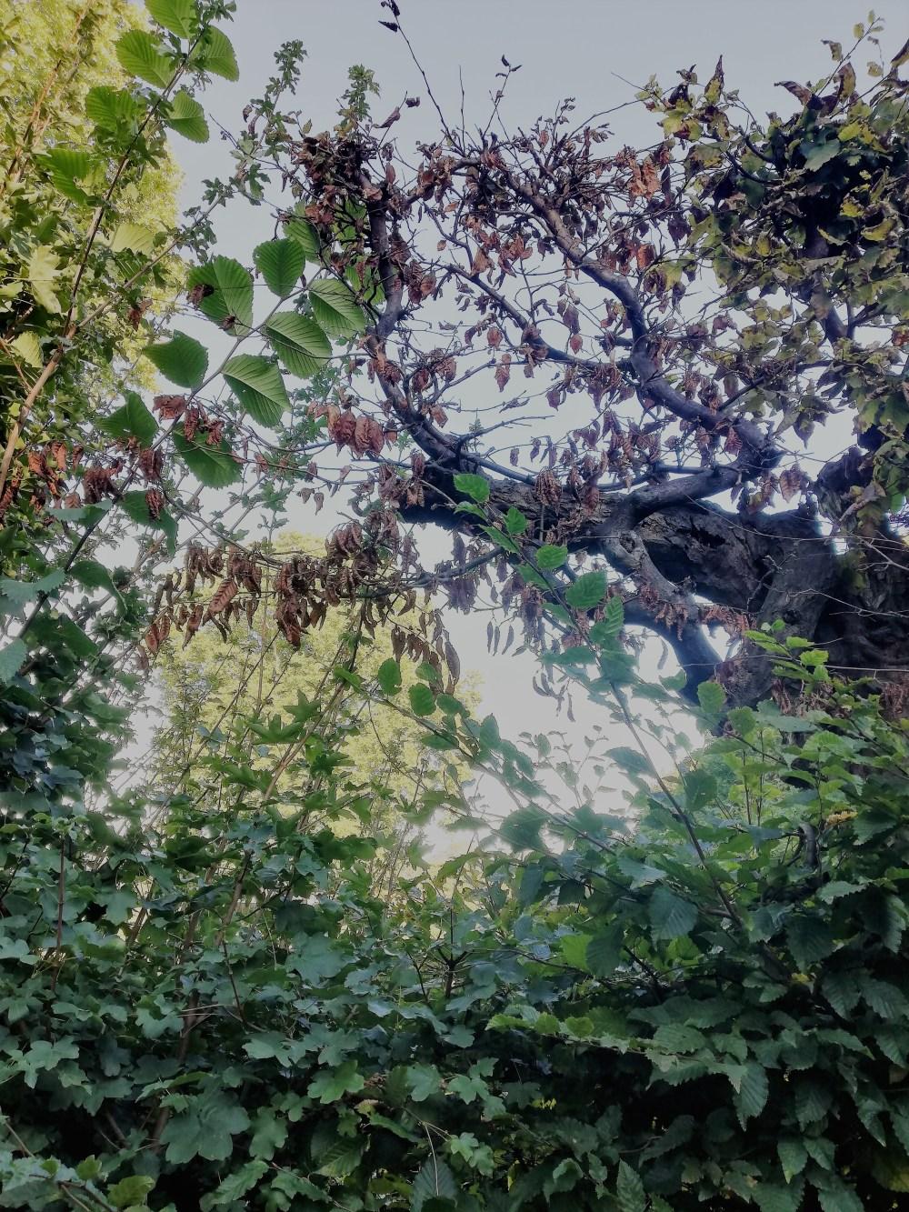 Bäume © Silvia Springer