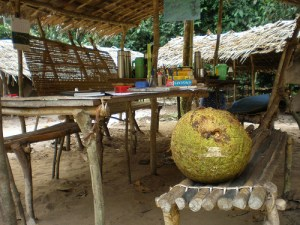 Rotting African Breadfruit