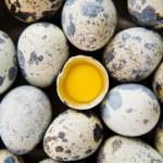 huevos de codorniz propiedades