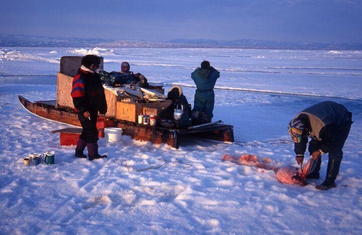caceria inuit