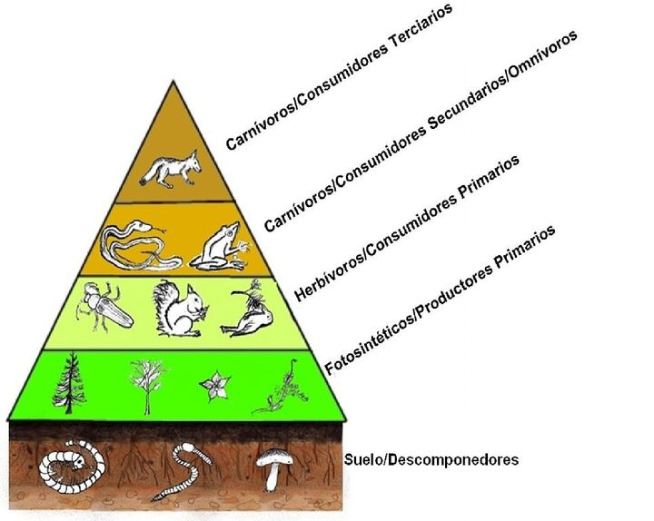 cladificacion animal