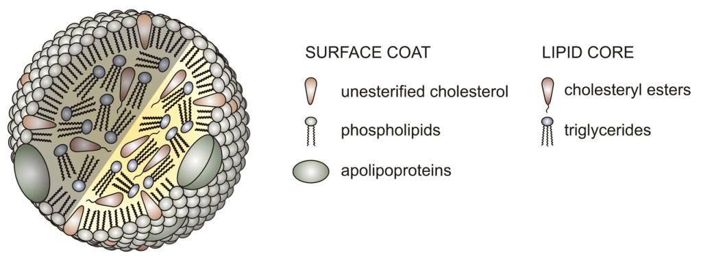 Lipoproteína de densidad intermedia