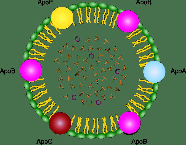 Lipoproteína de baja densidad