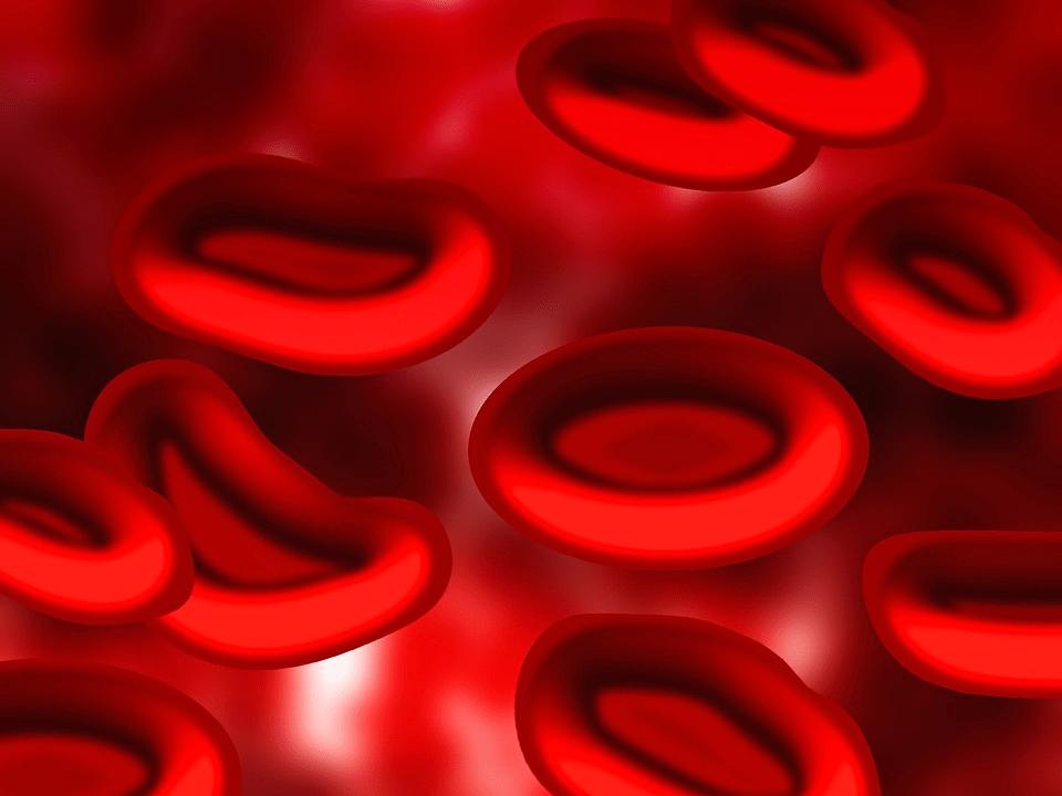 Dieta de tipo sanguíneo