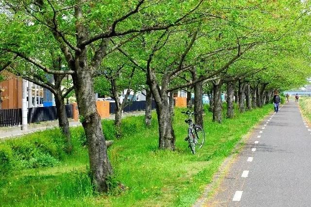散歩ダイエット成功するやり方【距離や時間】と消費カロリー!