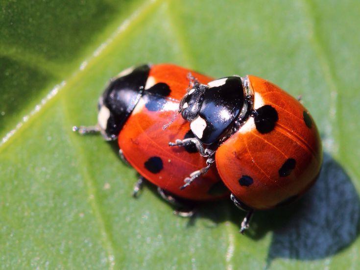 Côn trùng tìm bạn tình bằng cách nào – Thế giới côn trùng