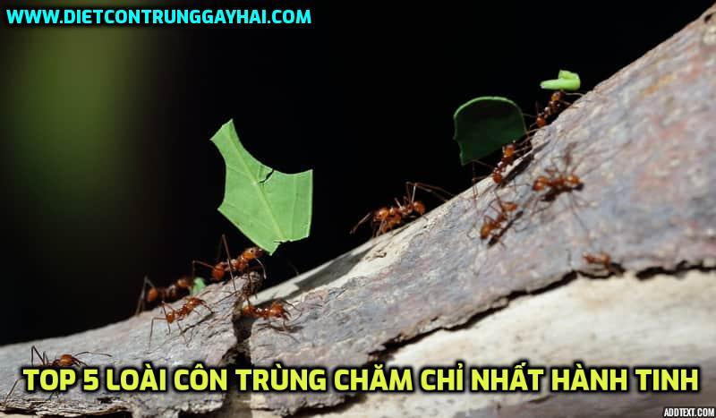 5 Loài côn trùng chăm chỉ & siêng năng nhất hành tinh