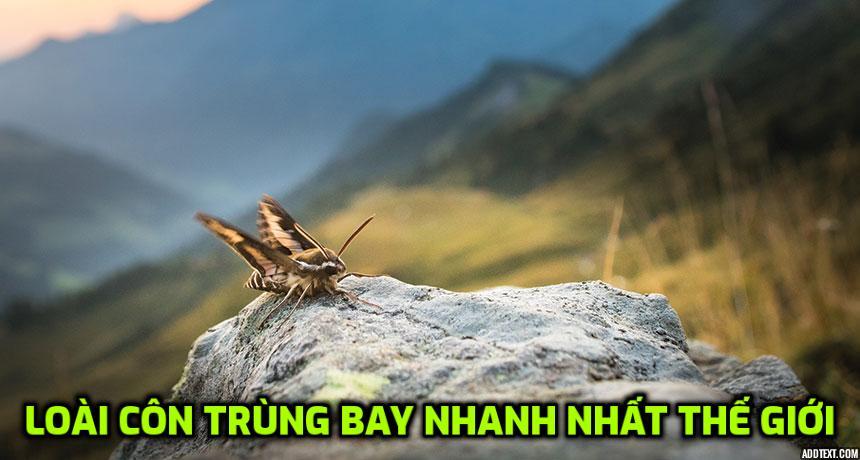 LOAI-CON-TRUNG-BAY-NHANH-NHAT-THE-GIOI
