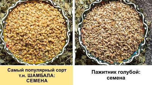 poate să-l facă pe fenugreek să te slăbească)