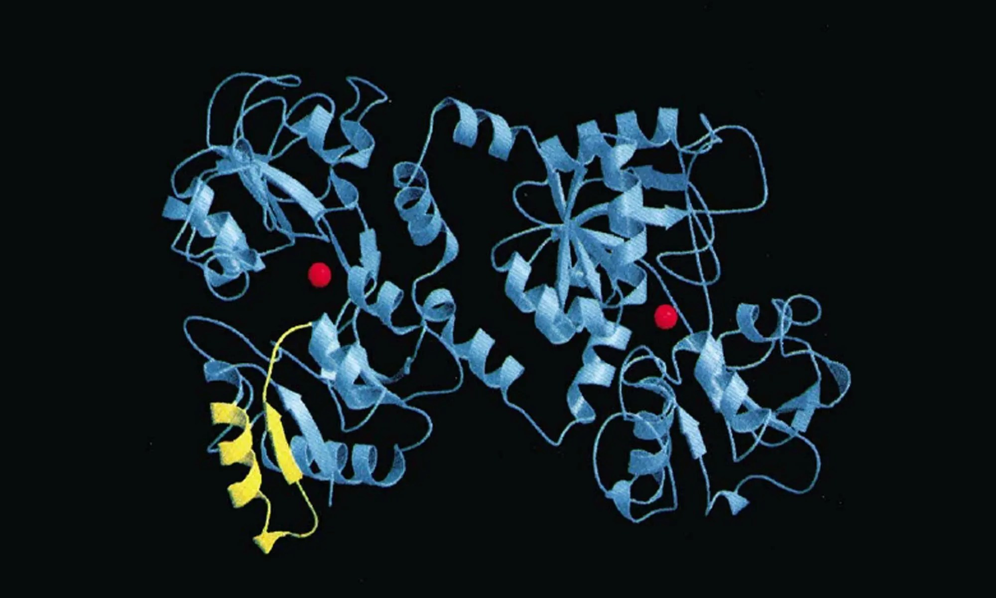 image of lactoferrin