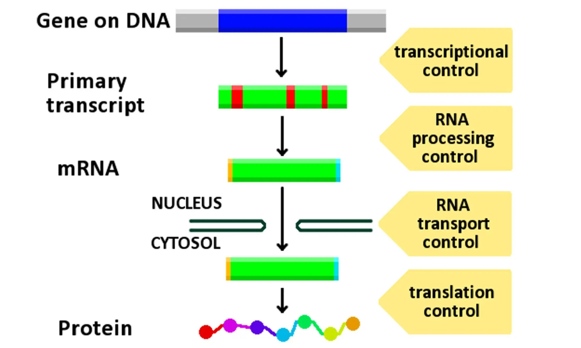 image of gene expression control