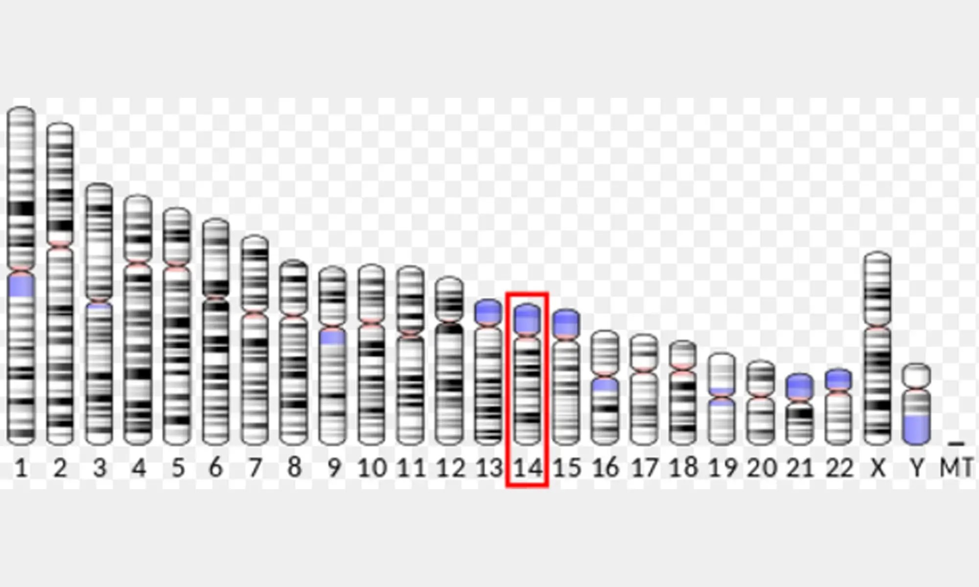 image of c-Fos gene location