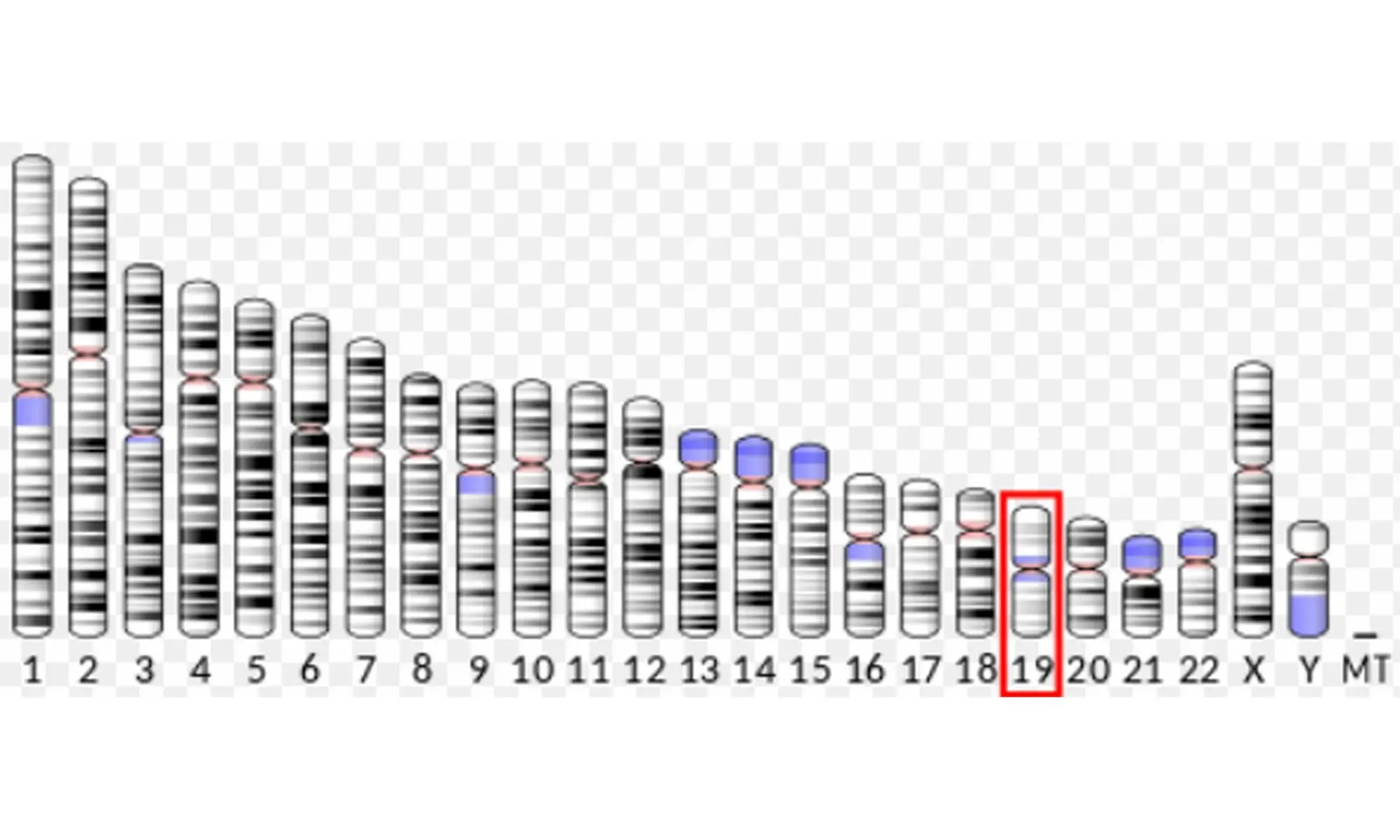 image of INSL3 protein