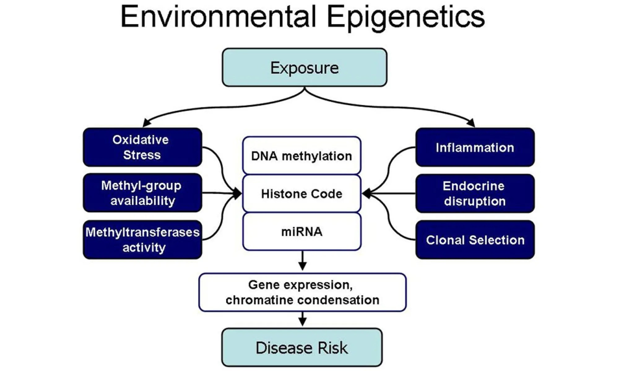 image of Potential mechanisms linking environmental exposures to epigenetic effects