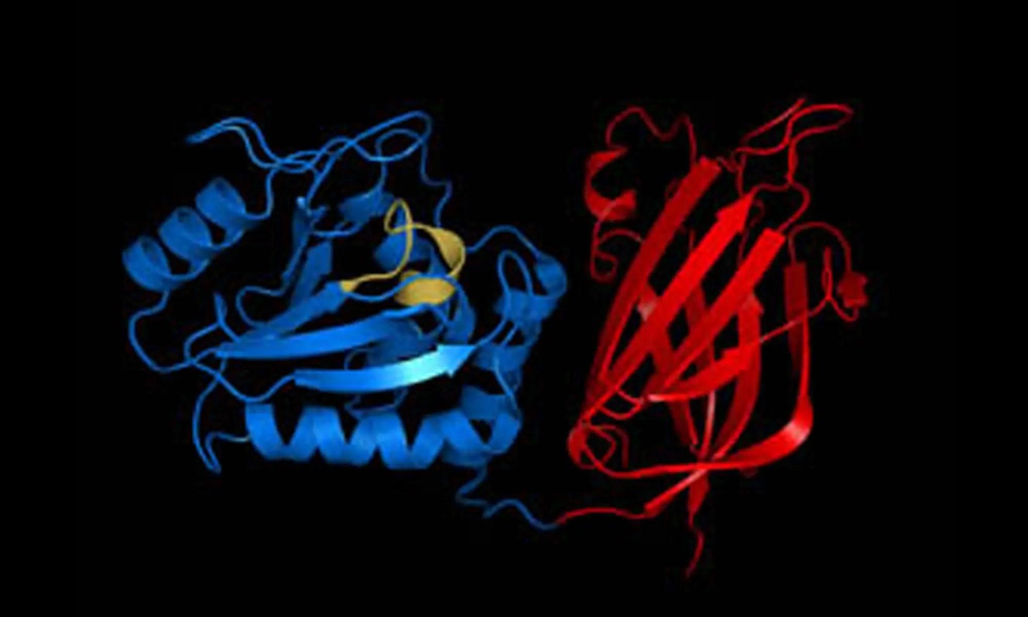 image of PTEN gene