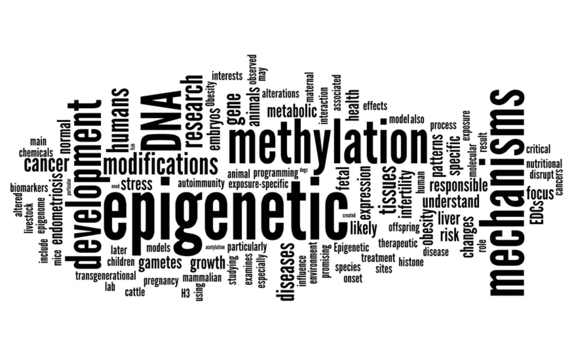 human epigenetics poster