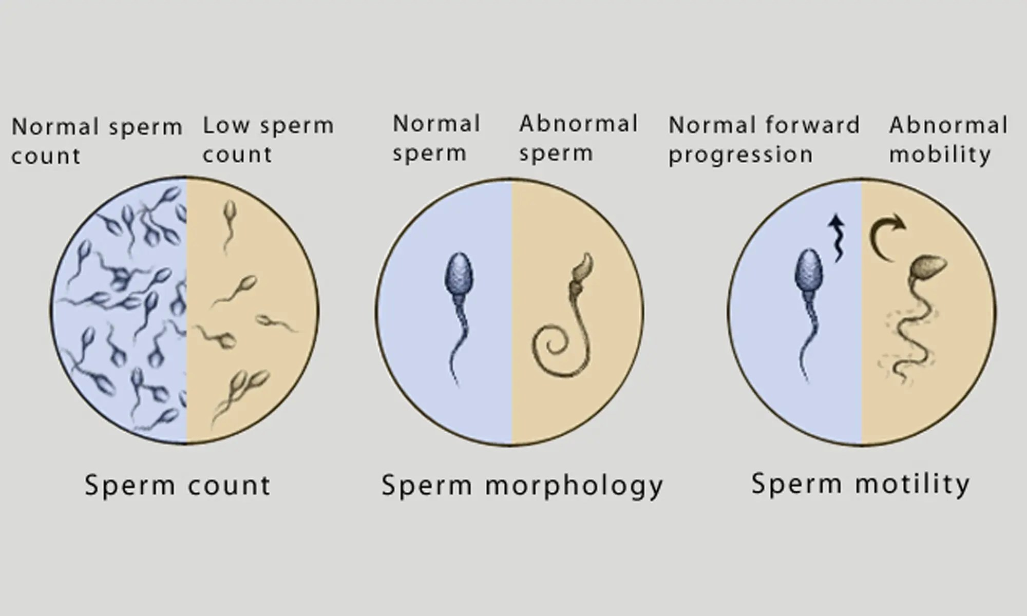 Think, that drugs that affect sperm for that