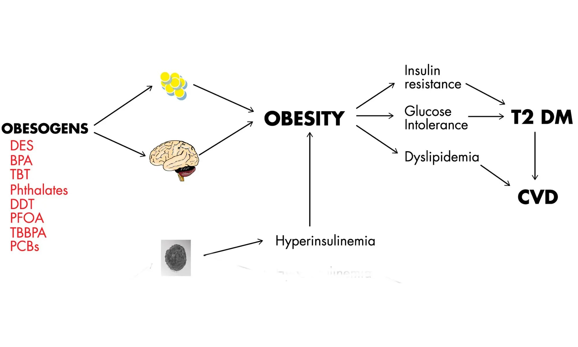 Etiology of obesity : Environmental Estrogen DES