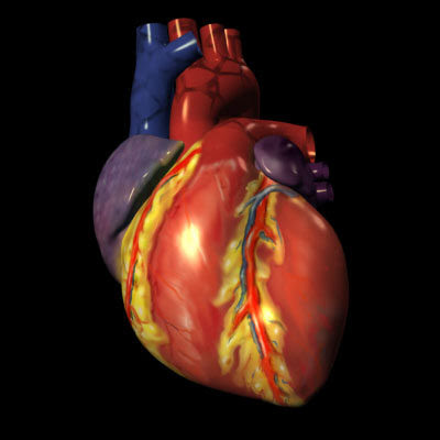 Dextrocardia : cauze, factori de risc si simptome
