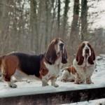 Borsellino und Al Capone auf dem Holzsteg