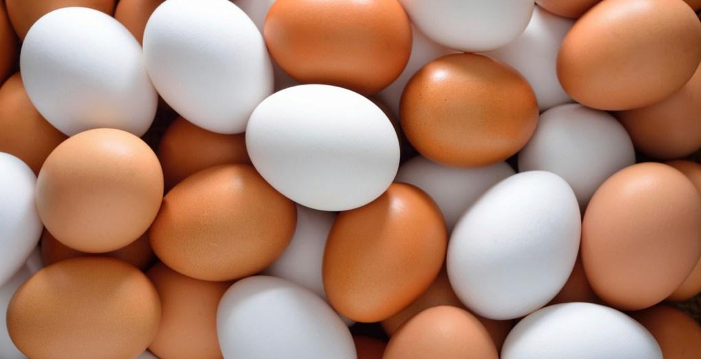 eggs hens