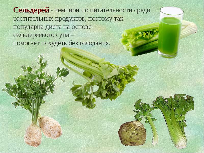 Рецепты Сельдерея Похудения. Полезные свойства сельдерея для похудения. Рецепты диетических блюд для похудения с сельдереем — супов, салатов, сока