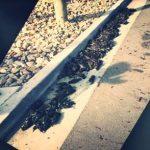 Weltweites Phänomen: Wieder stürzten Hunderte Vögel vom Himmel (Video)