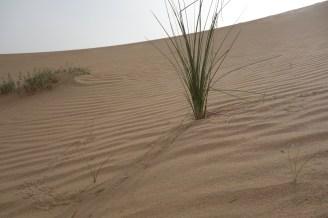 Abu Dhabi - eine Reise in eine andere Welt