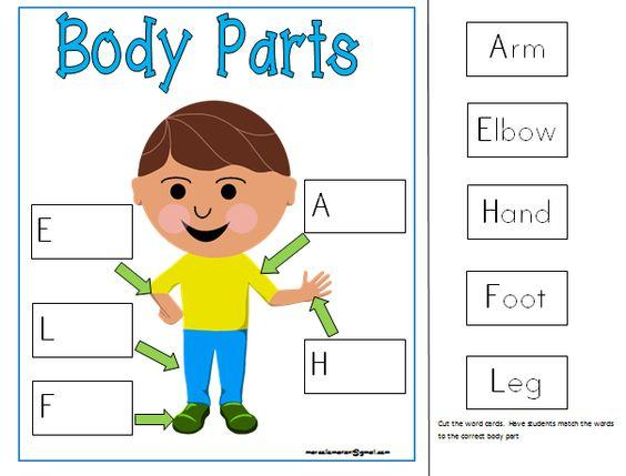 Preschool Worksheet For Body Parts