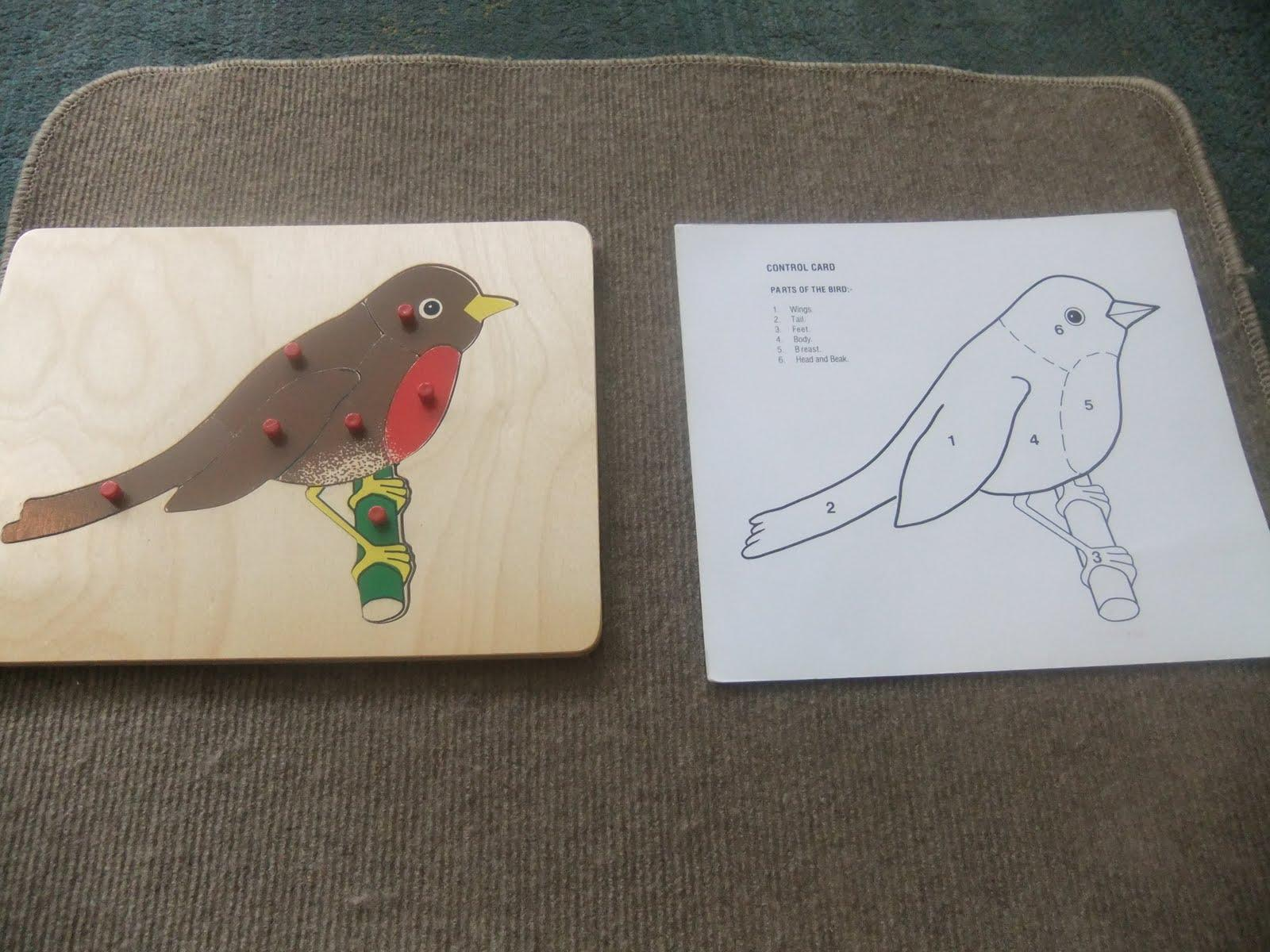 Preschool Bird Worksheets