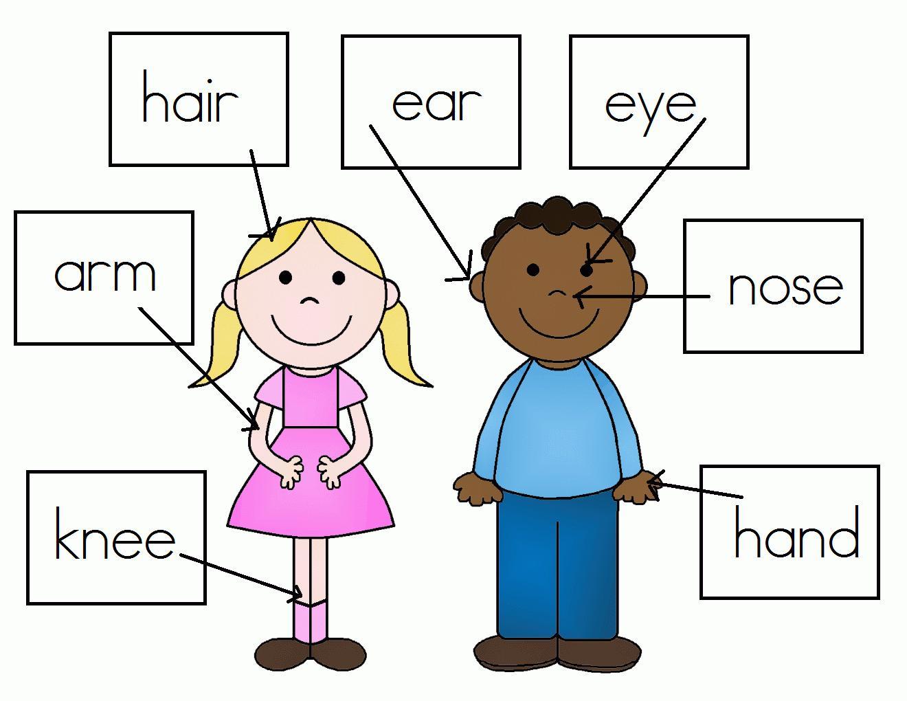 Preschool Worksheets My Body 4